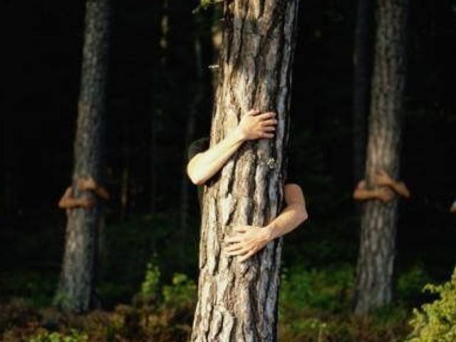 Actu Votre nouvelle expérience nature : le Bain de Forêt - Arbre avec des mains